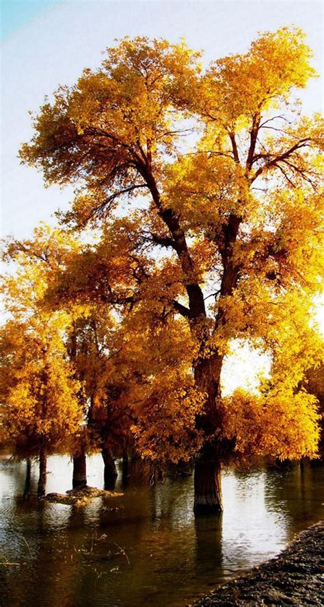 Awesome Autumn Wallpapers For Your iPhone HD - The Nology