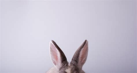 Expanding Efforts to Keep Cosmetics Testing From Animals