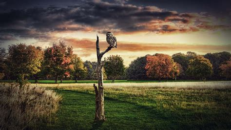 3D Owl And Scenery Wallpaper | HD Animals and Birds