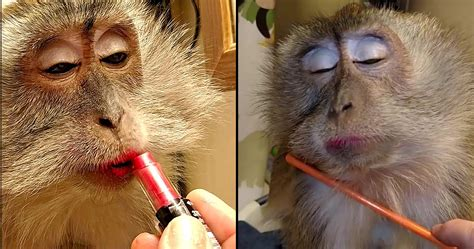 20 Everyday Products You Had No Clue Are Tested On Animals